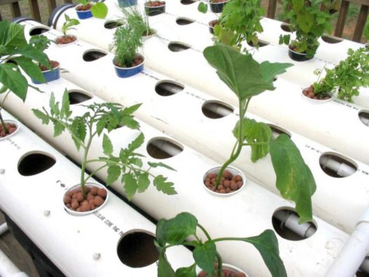 DIY Hydroponics as a Hobby at Home