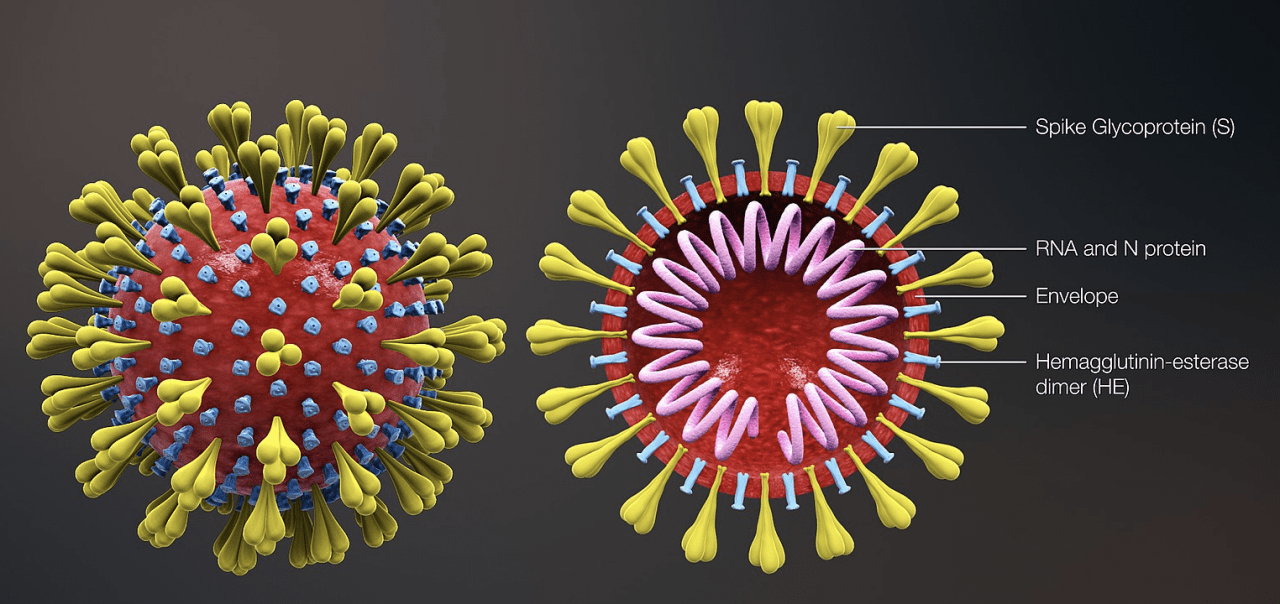 Everything You Need To Know About The CoronaVirus - COVID-19